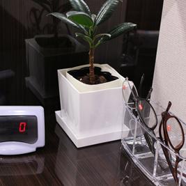 買取カウンターのミニ観葉植物と計数カウンター、老眼鏡